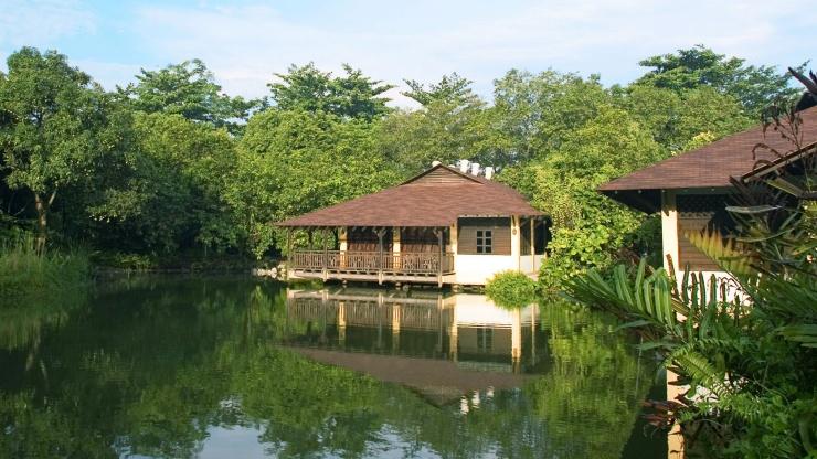 Discover Singapore's Wilder Side - the Sungei Buloh Wetland trail [Walking Tour]