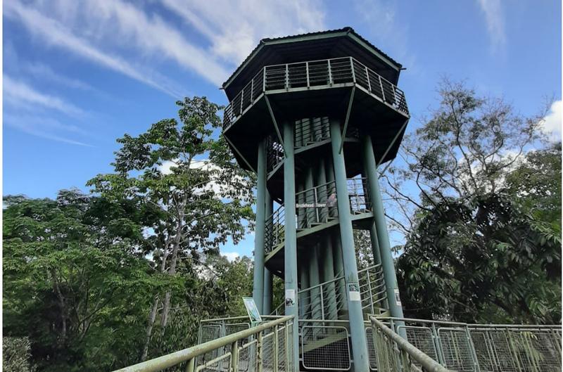 Sepilok Orang Utan Rehabilitation Centre, Rainforest Discovery Centre and Labuk Bay Proboscis Monkey Full Day Tour in Sandakan