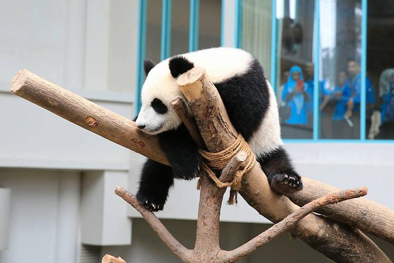Tiket Zoo Negara  (Zoo Negara Malaysia)