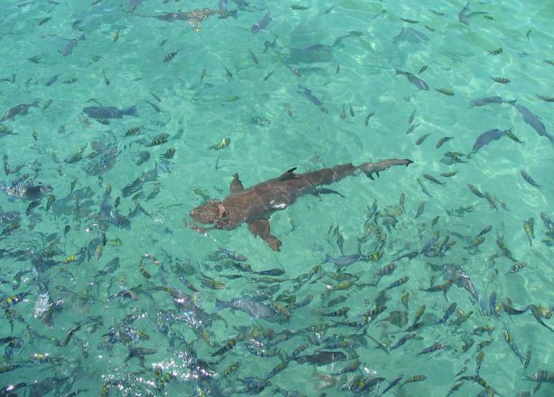 Pulau Payar Snorkeling & Diving Adventures from Langkawi
