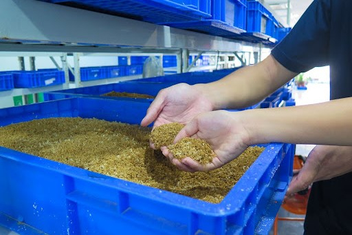 Singapore Insect Facility Tour