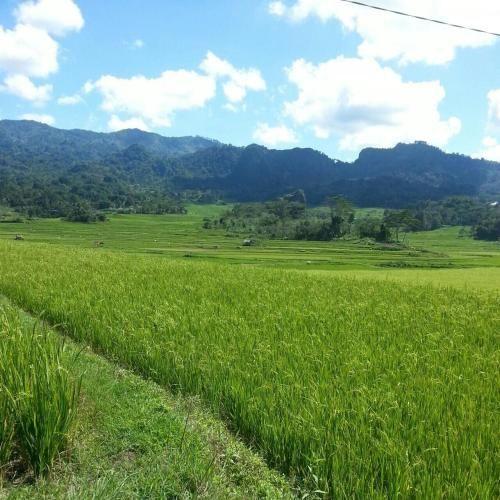 Villa/ Rumah di Kekpek, Tana Toraja