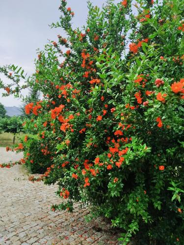 Quinta do Ervedal, Fundão