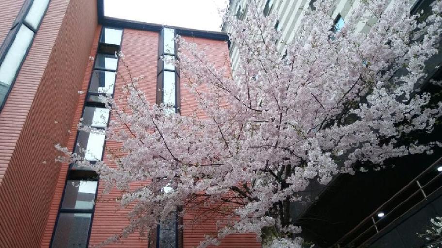 OppaHostel, Seodaemun