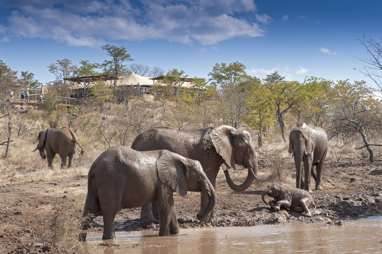 The Elephant Camp - All Inclusive, Hwange