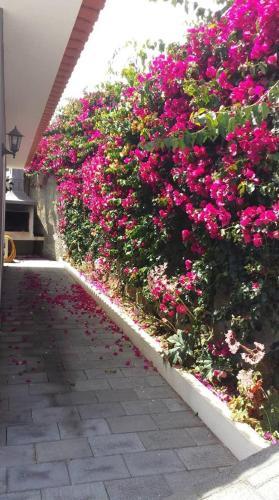 Paraiso das Flores, Calheta