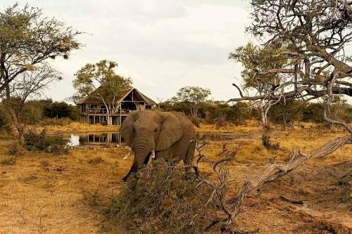 South Okavango | Omogolo Bush Lodges, Ngamiland East
