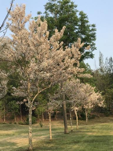 Suan Phueng Pa Wai Resort, Suan Phung