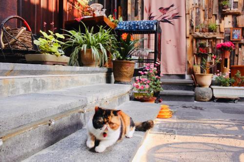 Xian Qing Ou Ji guesthouse, Baoshan