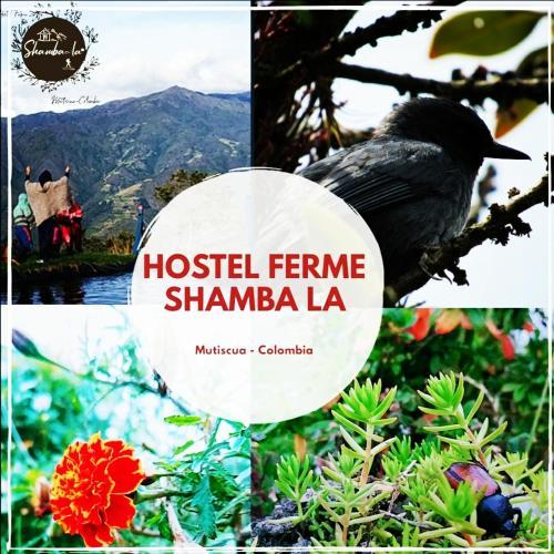 Hostel Ferme Shamba la, Pamplona