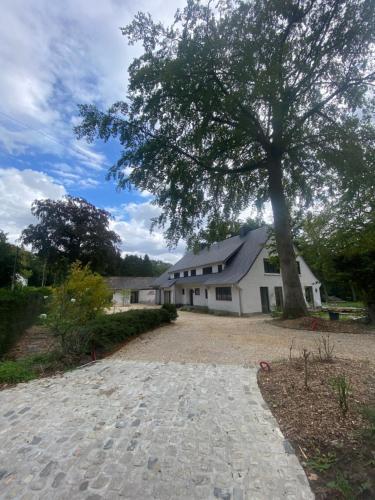 The Oak, Brabant Wallon