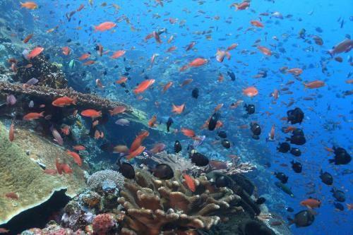 Penida Dive Resort, Klungkung