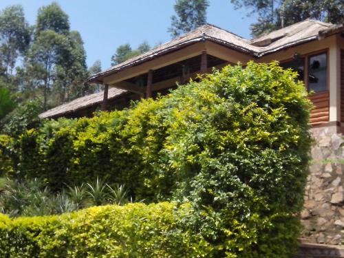 Bwindi Forest Lodge, Kinkiizi