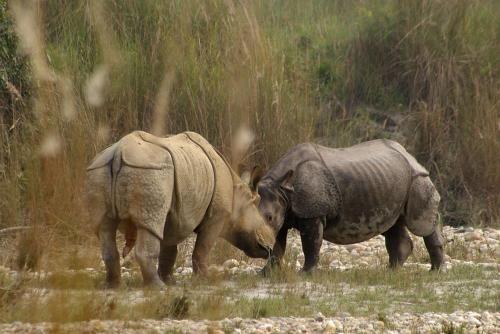 Bardia Wildlife Resort, Bheri
