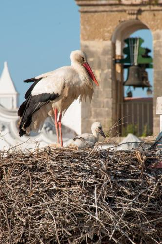 Stork Hostel, Olhão