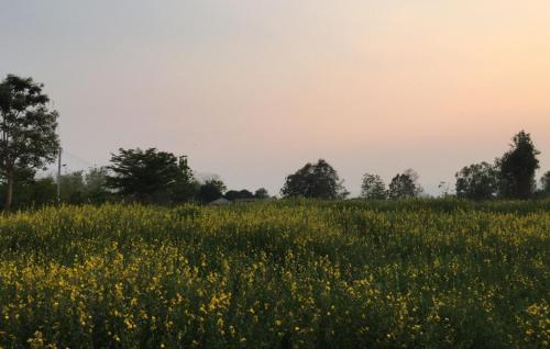 Health and herb farm stay cafe', Lom Sak
