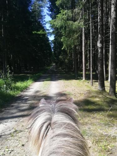 Ponyhof Adam Urlaub auf dem Bauernhof, Cham