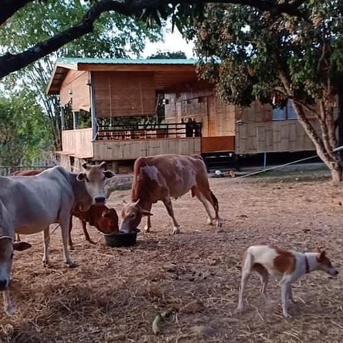 Karenorganicfarm, K. Doi Lo