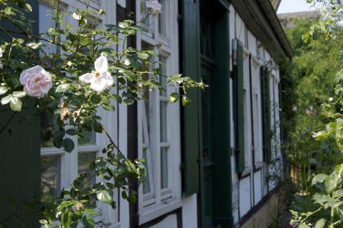 Rosindell cottage, Gütersloh