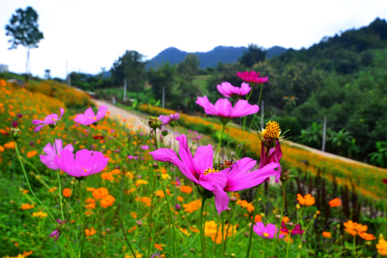 Chiangkhan River Green Hill, Chiang Khan