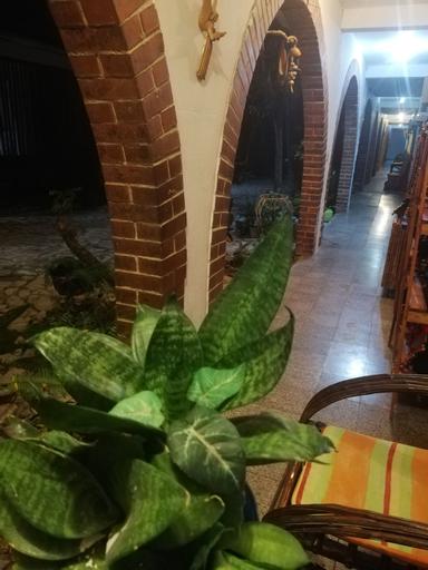 Hotel Villa Los Arcos, Flores