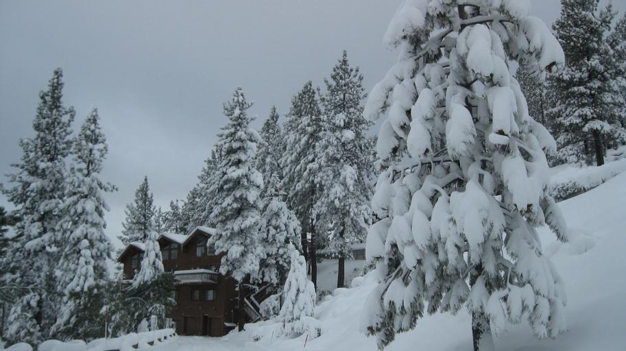 Tahoe Chaparral, Washoe