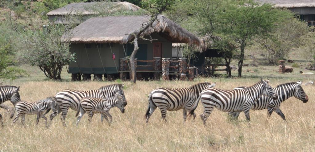 Grumeti Migration Camp, Serengeti