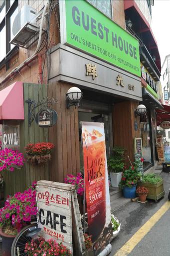 Owl's Nest Guesthouse - Hostel, Gangnam