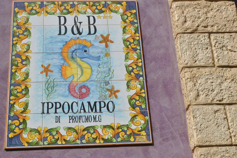 Ippocampo, Agrigento