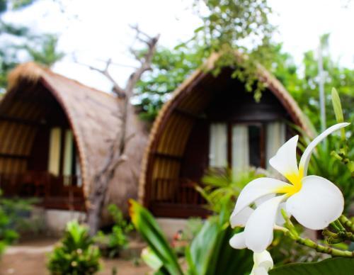 Meno Colanta, Lombok