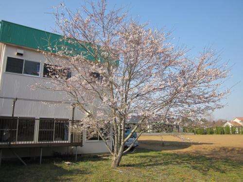 Narita Airport Hostel, Shibayama