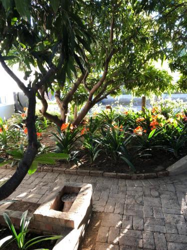 The Lemon Tree, Central Karoo