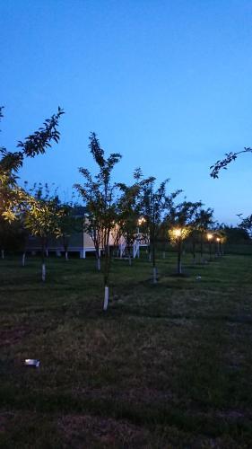 Our Garden, Qəbələ