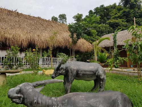 Ninh Binh Green field Homestay, Gia Viễn