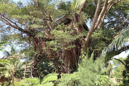 Castle Tree House, Whitesands