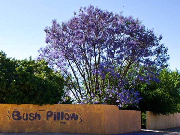 Bush Pillow Guest House, Otjiwarongo