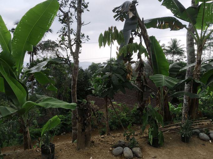 Arjuna Homestay, Kulon Progo