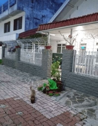 Emy's Guesthouse, Malang