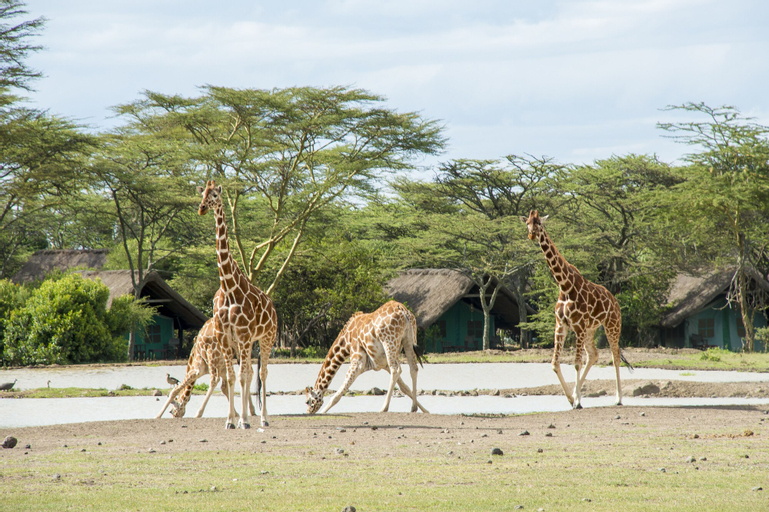 Sweetwaters Serena Camp, Laikipia North