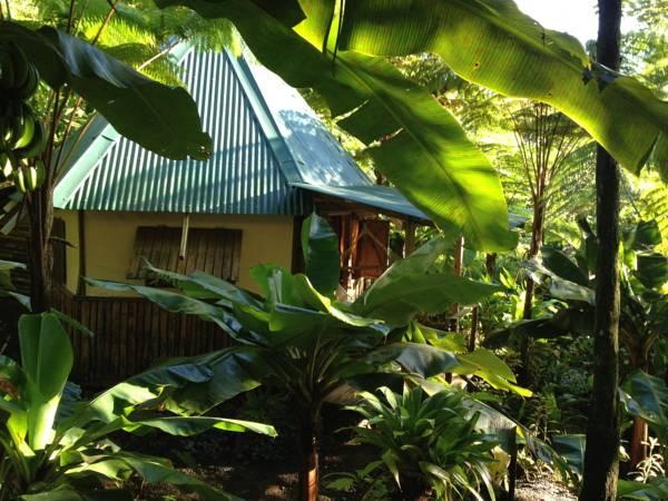 Roots Jungle Retreat,