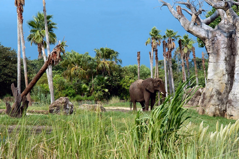 Holiday Inn Orlando – Disney Springs™ Area, Orange