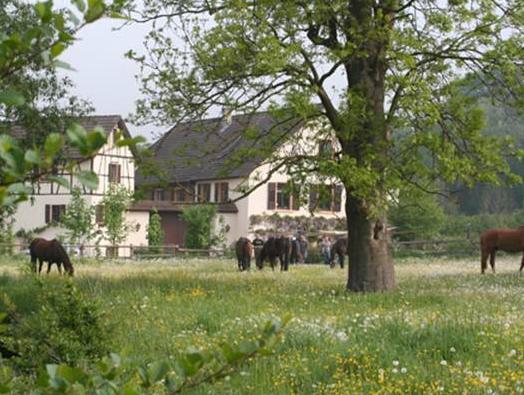 Eulenmuhle, Mainz-Bingen