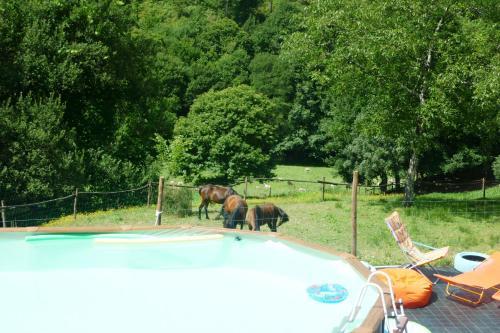 Farm with Animals, Cabeceiras de Basto