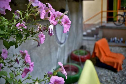 Backpackers Hostel,