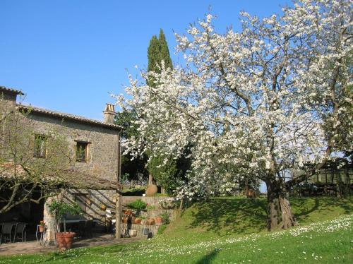 La Chiusetta, Terni
