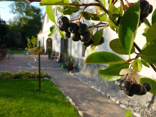 Aronia Park, Złotoryja