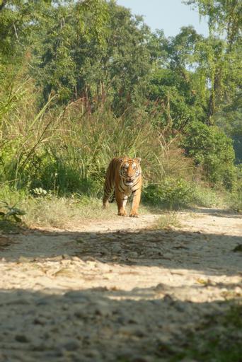 Kingfisher Jungle Trekking Tour, Narayani