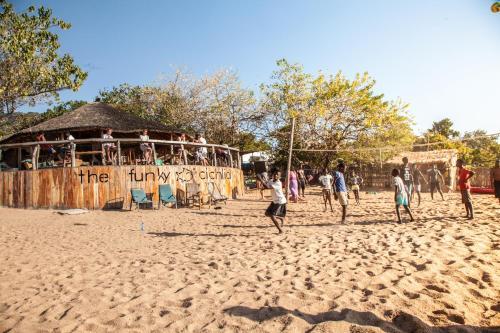 The Funky Cichlid, Lake Malawi