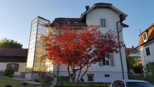 Casa Carmela, Solothurn