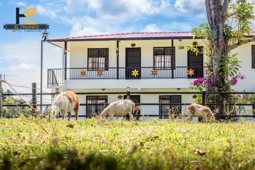 Hotel Campestre El Triunfo, Pitalito